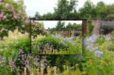 golygfa o'r blodau yng Ardd Beatrix Potter / view of the flowers within the Beatrix Potter Walled Garden